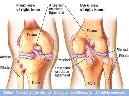 Anatomia ligamentos rodilla