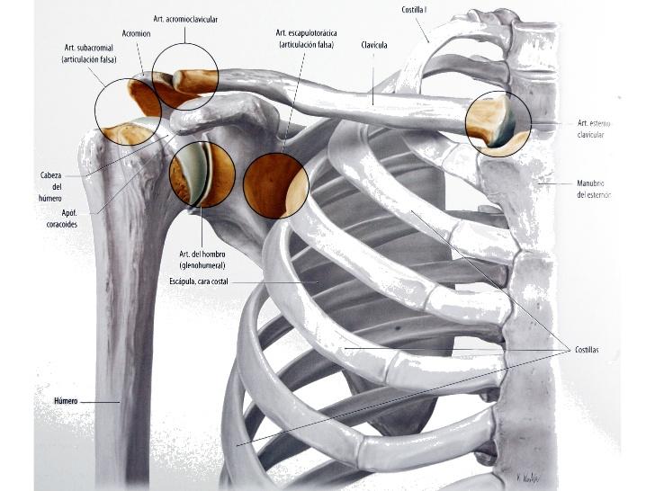 Dr Pablo Codesido | Traumatología, cirugía ortopédica y lesiones ...